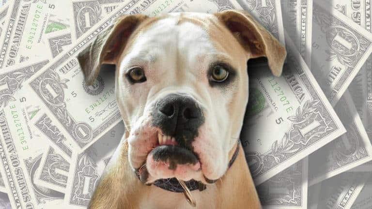 Chien grognon avec argent en arrière-plan