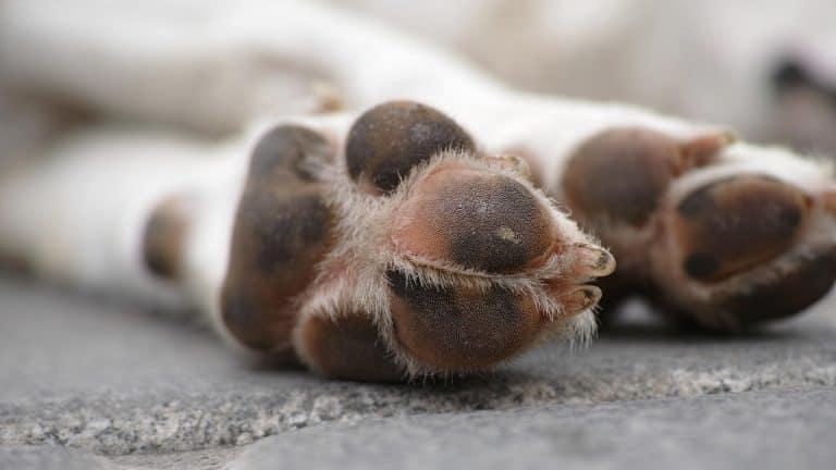 Coussins de pattes de chien