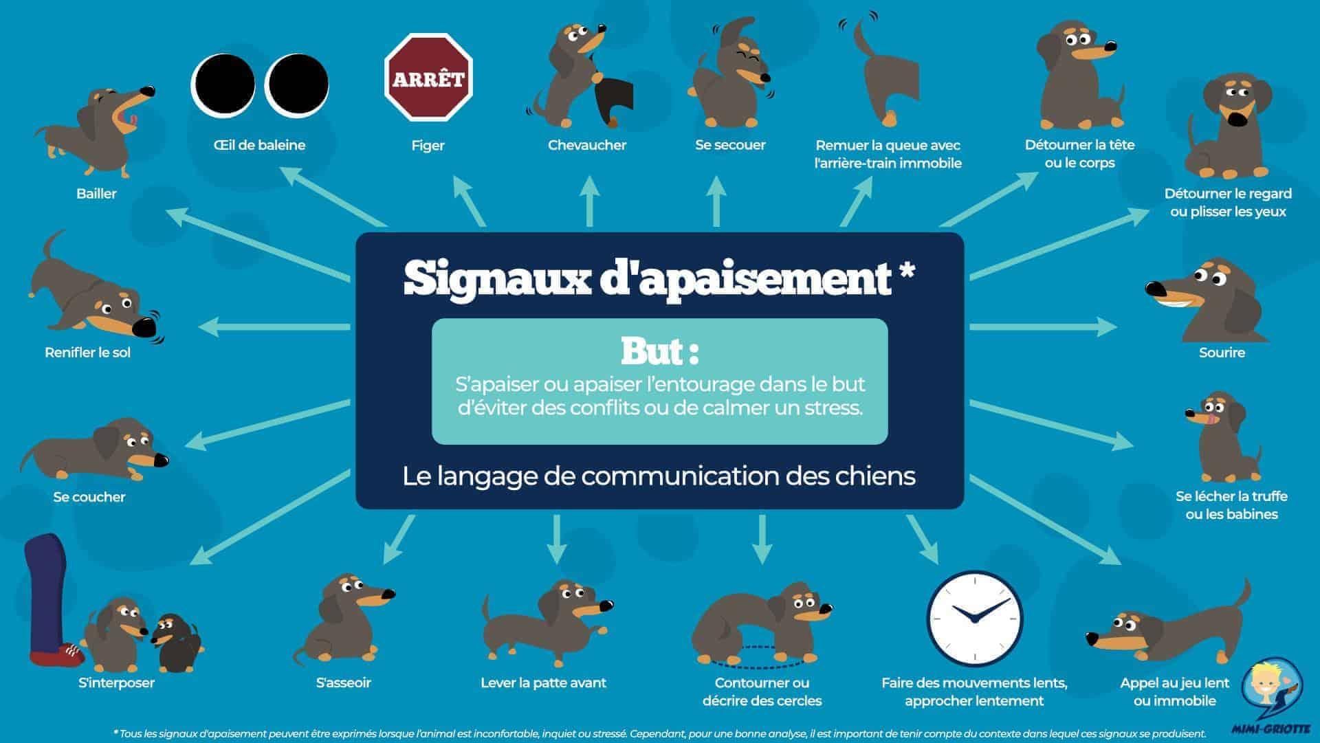 Infographie sur les signaux d'apaisement des chiens