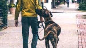 Propriétaire qui promène son chien