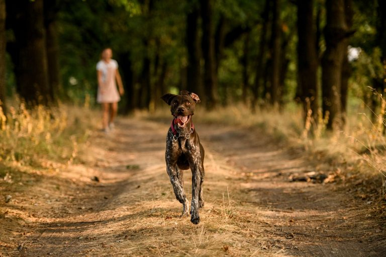 Chien brun qui court sur un chemin devant une fille