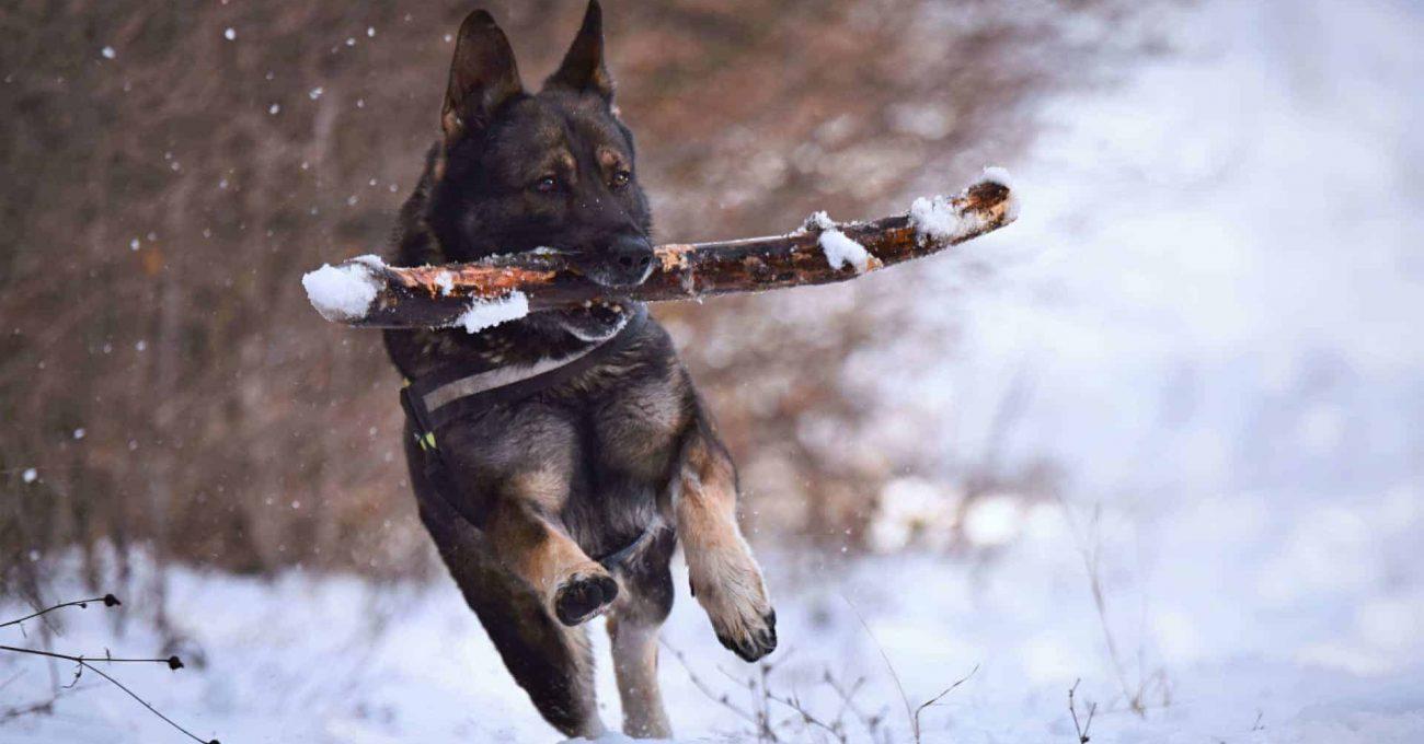 5-activités-hiver-chien