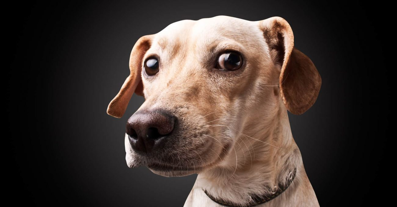 dog on black background with clipping path