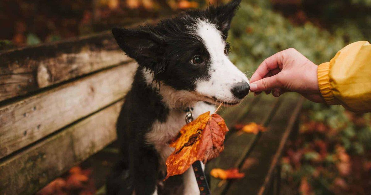 chien-anxieux-halloween