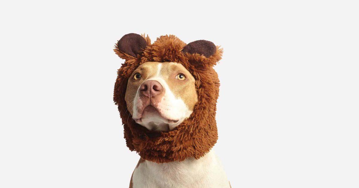 chien avec déguisement Halloween