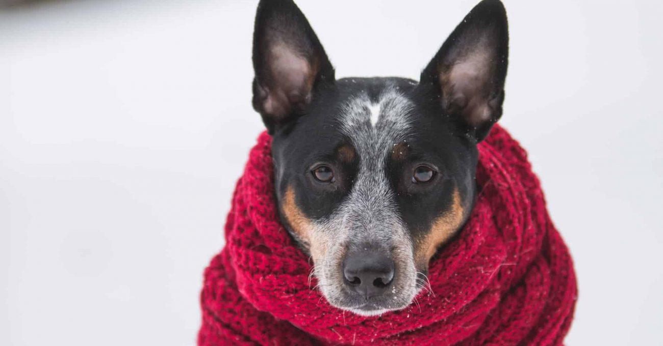 dog-red-coat