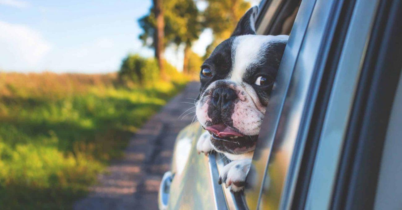road-trip-chien